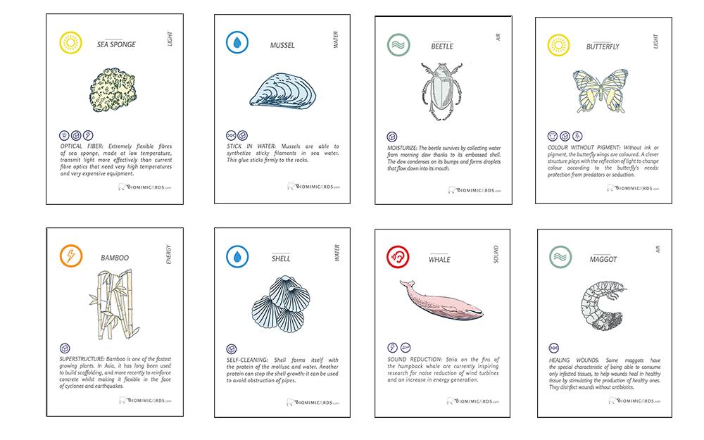 Cartes biomimétismes